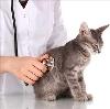Ветеринарные клиники в Нефтеюганске